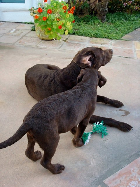 Saying Goodbye to the 'World's Best Dog'